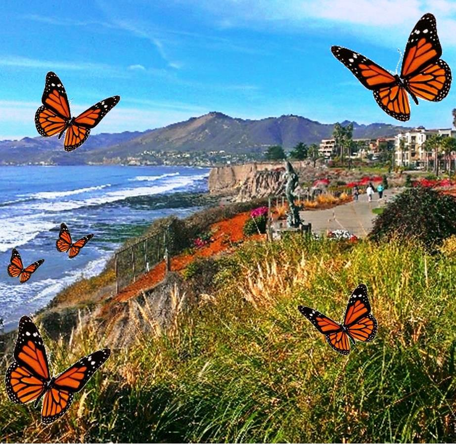 Pismo Beach The Monarch Erflies